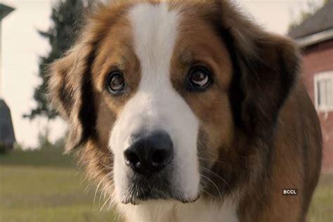 dogs purpose    dogs purpose