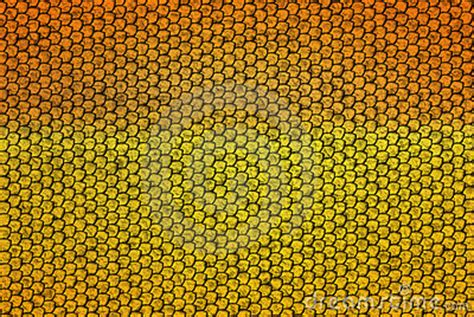 snake scales royalty  stock images image
