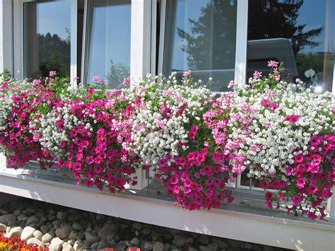 Schöne Kübelpflanzen Für Die Terrasse by Terrassen Und Balkonpflanzen Blumen Wapf 6147 Altb 252