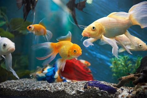 colorful aquarium fish 19 of the best fish stores for aquarium fish