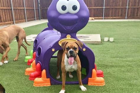 doggy day care dallas texas
