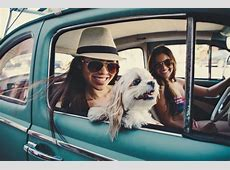 Top 50 Dog Friendly Road Trips Conscious Living TV