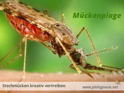 Hausmittel Gegen Mücken In Der Wohnung by M 252 Ckenplage Bek 228 Mpfen Hausmittel Gegen Stechm 252 Cken In Der