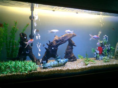 two fish tanks aquarium recipeapart