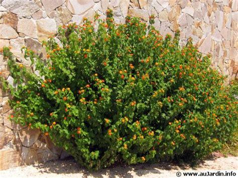 des plantes qui r 233 sistent 224 la s 233 cheresse