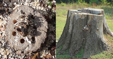 Diy Palm Tree Stump Removal  Diy (do It Your Self