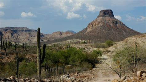 what is lanscaping what is the landscape like in mexico reference com