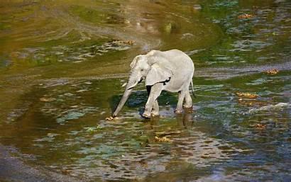 Elephant Wallpapers Wildlife African Desktop Wiki Animals