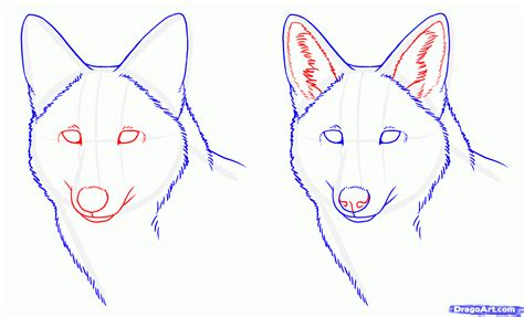 How To Draw Coyotes Prairie Wolf Step By Step Forest
