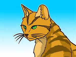 create a warrior cat how to emulate a warrior cat 9 steps wikihow