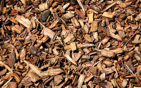 using bark chippings in garden should we use fresh or composted bark chippings in the garden