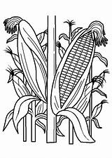 Plantation sketch template