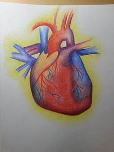 Human heart sketch with colored pencil   Assemblage final ...
