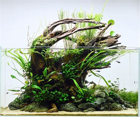 50 Aquascape Aquarium Design Ideas Meowlogy