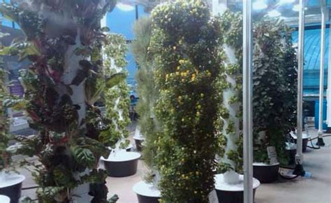 Vertical Garden Chicago by How To Grow A Vertical Garden Save On Groceries