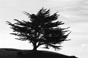 Papier Peint Arbre Noir Et Blanc : papier peint original d cor mural en dition limit e papier peint photo arbre myst rieux ~ Nature-et-papiers.com Idées de Décoration