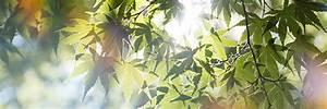 Quel Arbre Planter Près D Une Maison : planter un arbre ou un arbuste une activit d 39 automne ~ Dode.kayakingforconservation.com Idées de Décoration