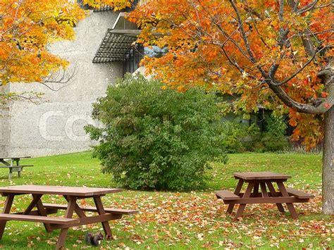 picnic place  squirrel eating  nut  autumn park