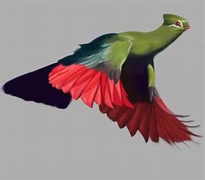 Bird Art | Murray Ralfe Art  Bird
