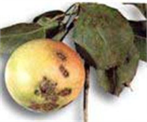 http://articulos.infojardin.com/Frutales/enfermedades-frutales-hueso-pepita.htm