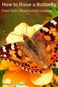 Butterflies For Kids  Free Butterfly Journal