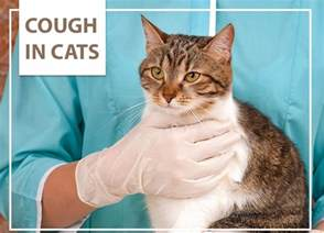 cat cough cough in cats the pet professionals
