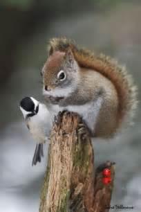 Squirrel and Chickadee