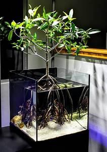 Pflanzen Terrarium Einrichten : pin von akiko urata auf indoor wassergarten aquarien und aquarium aquascape ~ Watch28wear.com Haus und Dekorationen