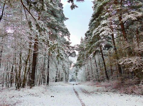 photo winter forest path snow wintry  image