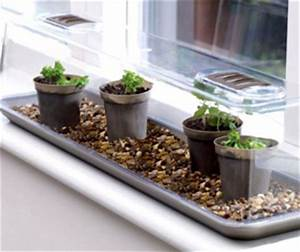 Mini Serre D Intérieur : une mini serre pour jardiner l 39 int rieur nouvelle vie ~ Dailycaller-alerts.com Idées de Décoration