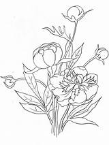Coloring Peony Flower Pages Flowers Printable Print Recommended Colors Mycoloring sketch template