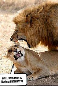 Funny Animal Humor