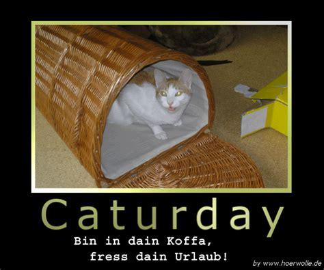 Caturday Meme - image 181623 caturday know your meme