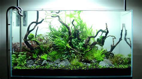 Aquascape Piranha by Hypnotic Timelapse Of Aquascaping A Planted Aquarium