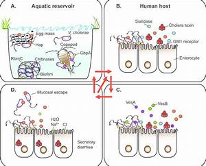 The T2s Substrates Facilitate Survival And Fitness Of V