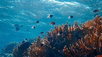 Underwater Ocean Fish Algae Corals 1080p Arrecife