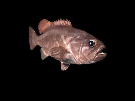 bass grouper 3d