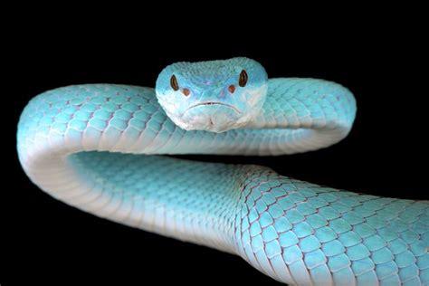 snake snakes types