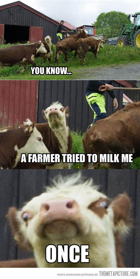 Funny Cow Memes - funny cow face meme www imgkid com the image kid has it