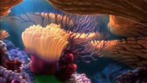 All comments on Finding Nemo DVD Menu - YouTube