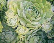 Botanical Colored Pencil Drawings