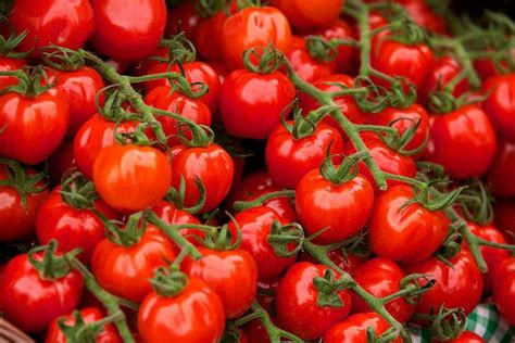 gardening tomatoes how to grow tomatoes rhs gardening
