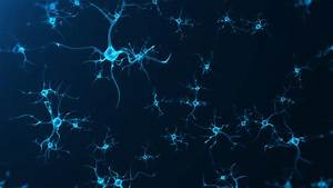 This Sensor Lets Scientists See Neuron