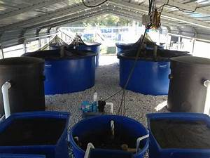 Visiting Pentair Aes U2019s Aquaponics Facility  U00bb Fish Farming News