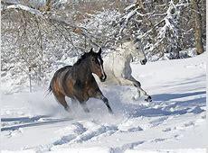 Pferde im Schnee herrliche Bilder zum Inspirieren