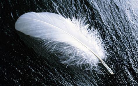 Bird White Feather Single White Feather