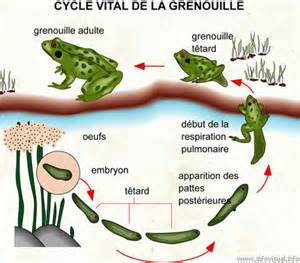 Milieu De Vie De La Grenouille by Circonscription De Pompey