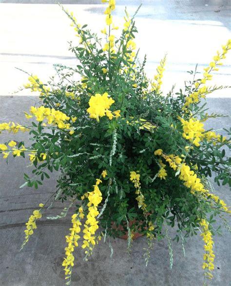 plantes fleuries exterieur en pot