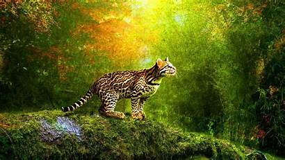 3d Animation Wallpapers Desktop Tiger Cave