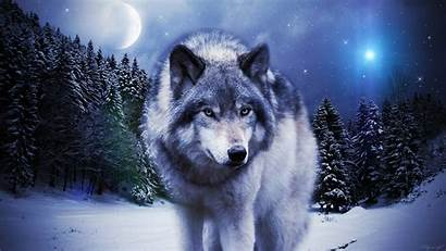 Wolf Timber Wolves Background Wallpapertag Widescreen
